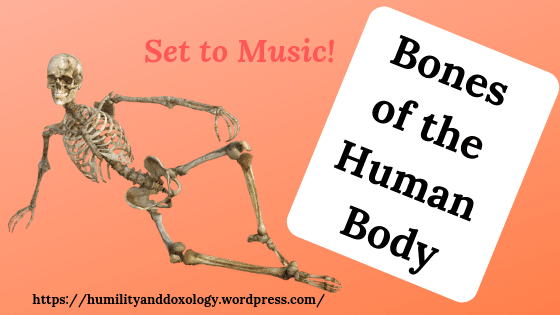 Bones of the Human Body Song, homeschool science